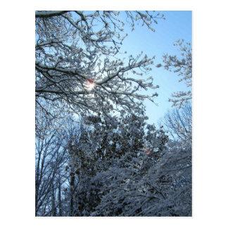 Sunlit Snowy Trees Starburst Blue Sky Winter Postcard
