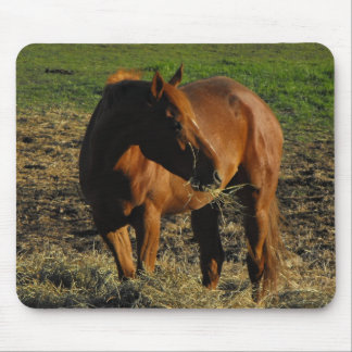 Sunlit Thoroughbred Horse Mouse Pad