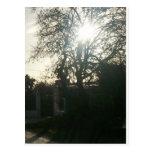 Sunlit tree. postcards