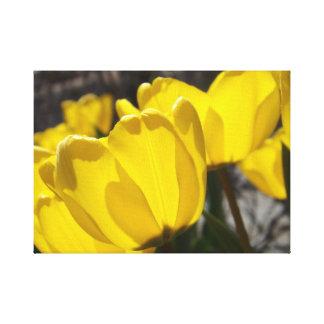 Sunlit Tulips Canvas Print