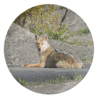 Sunning Coyote Plate