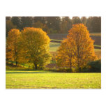 Sunny Autumn Postcard