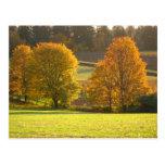 Sunny Autumn Postcards