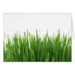 Sunny bright green grass photograph print greeting card