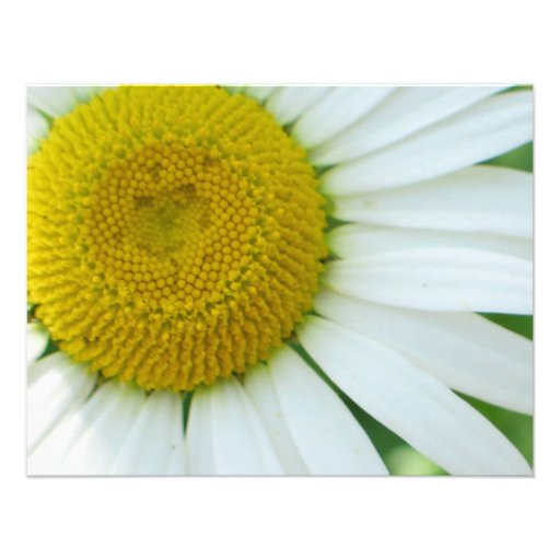 Sunny Center Yellow and White Daisy Custom Announcements