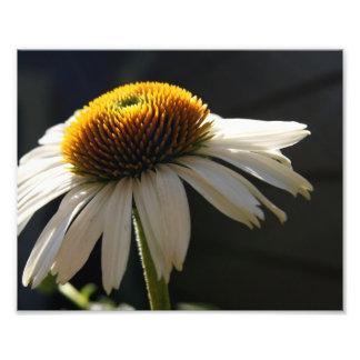 Sunny Daisy 10x8 Photographic Print