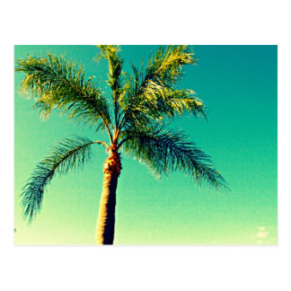 Sunny Florida Palm Tree Sky Picture Postcard