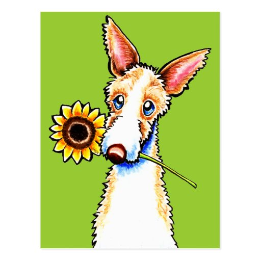 Sunny Ibizan Hound Wirehaired Off-Leash Art™ Postcard