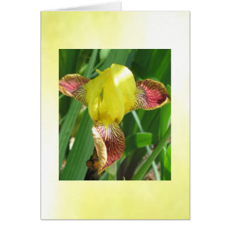 Sunny Iris customizable Card