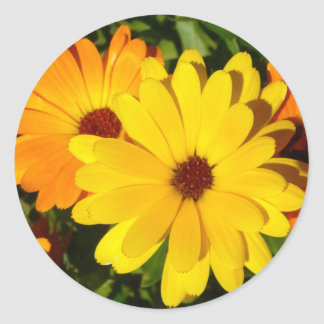 SUNNY MARIGOLDS   Stickers