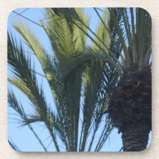 Sunny Palm Trees Beverage Coaster
