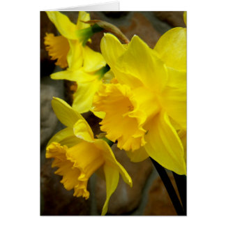 Sunny Petals Greeting Cards