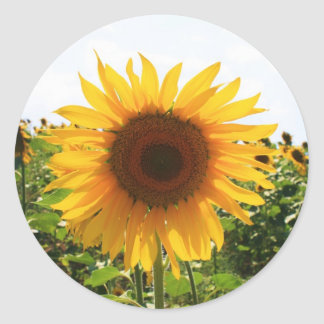 Sunny Sunflower Classic Round Sticker