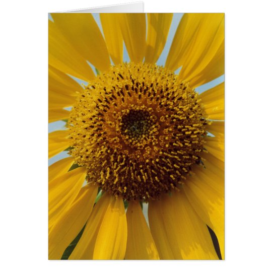Sunny Sunflower -  Giant Yellow Centre Close up Card