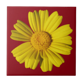 Sunny Yellow Chamomile - Custom Background Color - Small Square Tile