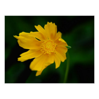 Sunny yellow flower and its meaning poster