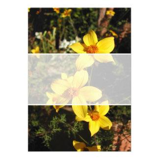 Sunny Yellow Flowers Bidens Custom Announcements