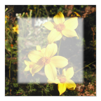 Sunny Yellow Flowers. Bidens. 5.25x5.25 Square Paper Invitation Card