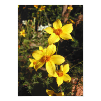 Sunny Yellow Flowers. Bidens. Announcement