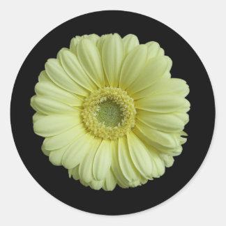 Sunny Yellow Gebera Flower Classic Round Sticker