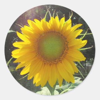 Sunny Yellow Sunflower Classic Round Sticker