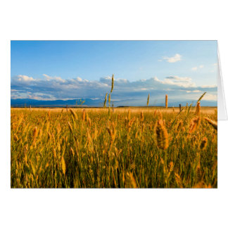Sunrays over field of wheat with mountains card