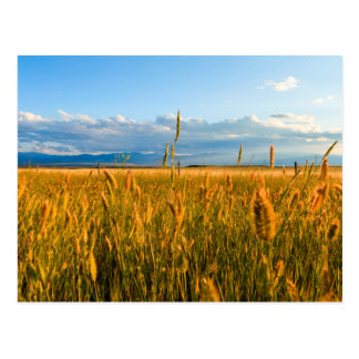 Sunrays over field of wheat with mountains postcard