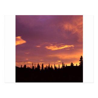 Sunrise Boreal Forest Alaska Postcards