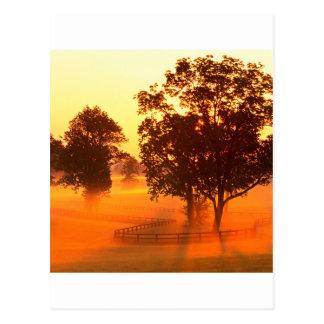 Sunrise Horse Farm Versailles Kentucky Postcard