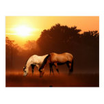 Sunrise horses postcard