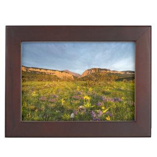 Sunrise Lights Blackleaf Canyon Memory Box