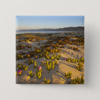 Sunrise lights the sand dunes and sea fig at 15 cm square badge