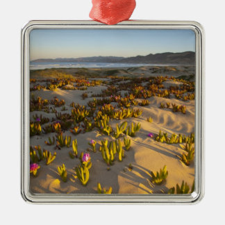 Sunrise lights the sand dunes and sea fig at christmas ornament
