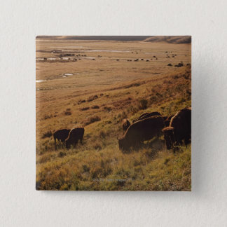 Sunrise On Bison 15 Cm Square Badge