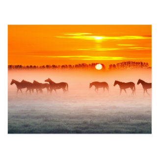 Sunrise Over A Foggy Field Of Horses Postcard