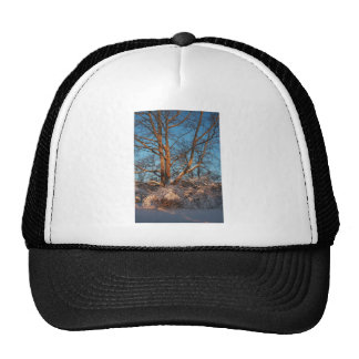 Sunrise, Snow and Sycamore Trucker Hat