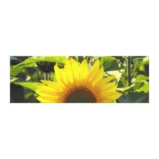 Sunrise Sunflower Canvas Print (36X12)