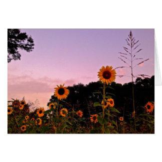 Sunrise Sunflowers Greeting Card