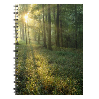 Sunrise through oak and hickory forest, Mammoth Notebook