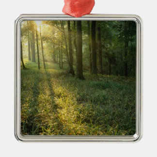 Sunrise through oak and hickory forest, Mammoth Silver-Colored Square Decoration