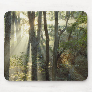 Sunrise through oak and hickory forest, mouse pad
