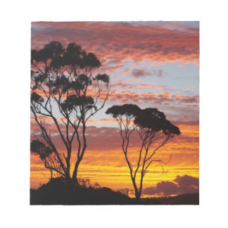 Sunset and Gum Tree, Binalong Bay, Bay of Fires, Notepad