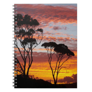 Sunset and Gum Tree, Binalong Bay, Bay of Fires, Spiral Notebook