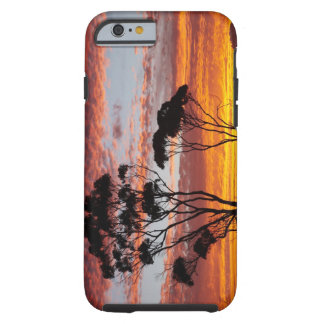 Sunset and Gum Tree, Binalong Bay, Bay of Fires, Tough iPhone 6 Case