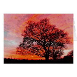 Sunset and Oak. Card