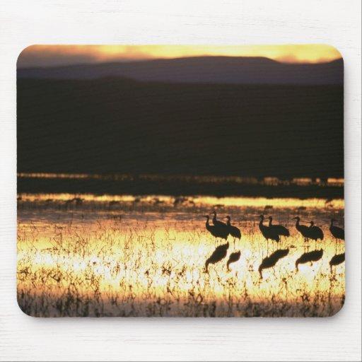 Sunset at Bosque del Apache National Park Mouse Pad