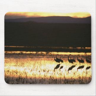 Sunset at Bosque del Apache National Park Mousemat