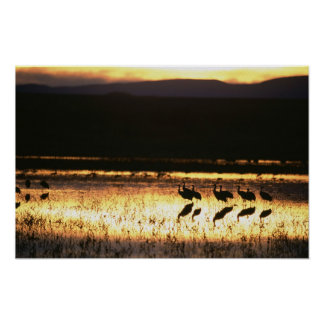 Sunset at Bosque del Apache National Park Poster