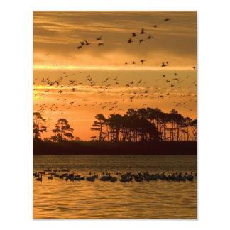 Sunset at Chincoteague Wildlife Refuge Virginia Photo Print