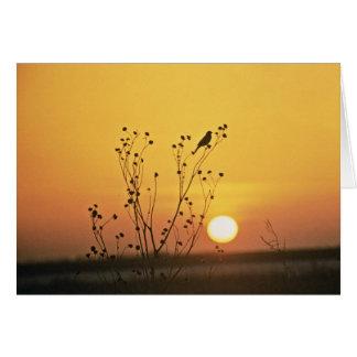 Sunset at Tewaukoa National Wildlife Refuge Greeting Card